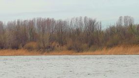 Riverbank covered with bare trees and group of tourists walking along. Ripples on water stock footage