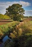Riverbank da queda de Ealy Fotos de Stock Royalty Free
