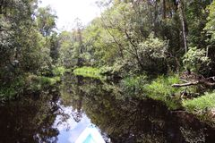 Riverbank en el bosque de Borneo imagen de archivo