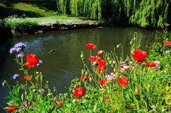 Riverbank en primavera, Tamworth fotografía de archivo