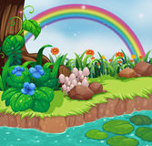 A riverbank with flowers and a rainbow Royalty Free Stock Photography