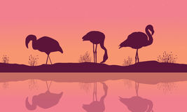 Riverbank landscape with flamingo silhouettes Royalty Free Stock Photos