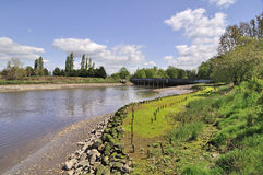 Riverbank  in low tide Royalty Free Stock Photos