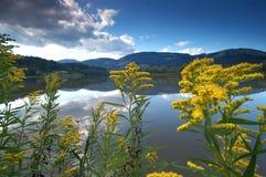 Riverbank met bloemen Stock Foto's