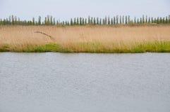 Riverbank met een boom Royalty-vrije Stock Fotografie