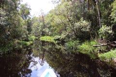 Riverbank na floresta de Bornéu imagem de stock