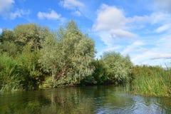 riverbank overwoekerd met wilgen en riet Royalty-vrije Stock Afbeeldingen