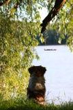 Riverbank przygody Zdjęcie Royalty Free