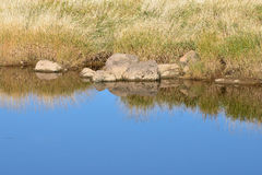 Riverbank Reflection Royalty Free Stock Images