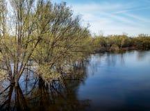 Riverbank Spills into Neighboring Trees royalty free stock photos