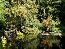 Riverbank with Trees and Water Reflection Royalty Free Stock Photography