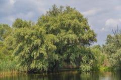 Riverbank van de rivier van Donau Stock Foto