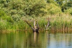 Riverbank van de rivier van Donau Stock Foto's