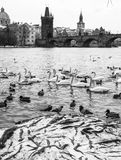 Riverbank van de Vltava-Rivier Charles Bridge, Praag, Tsjechische Republiek Royalty-vrije Stock Foto's