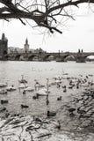 Riverbank van de Vltava-Rivier Charles Bridge, Praag, Tsjechische Republiek Royalty-vrije Stock Fotografie