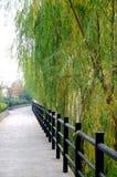 Riverbank willows Stock Photos