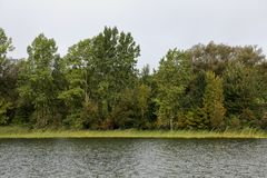 Riverbank z trawami i drzewami obrazy stock