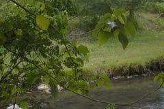 Riverbankgebied Royalty-vrije Stock Foto's