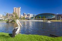 Riverbankgebied van Adelaide in Zuid-Australië Royalty-vrije Stock Foto's