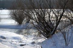 Riverbanks Borcea Fotografia Royalty Free