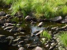 riverbed Стоковые Фото