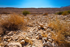 Riverbed Stock Images