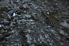 riverbed Zdjęcie Royalty Free