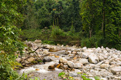 Riverbed with bridge. In ruwenzori mountains, uganda royalty free stock images
