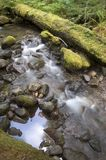 Riverbed in rain forest Mossy Forest Floor Stock Photography