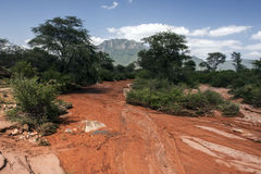Riverbed after rain. Watercourse after rain in afrika Royalty Free Stock Images