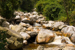 Riverbed in ruwenzori mountains Royalty Free Stock Photography