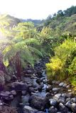 Riverbed. View of the riverbed at sunset Stock Photography