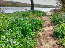 Riverbend公园走的足迹弗吉尼亚春天 免版税库存图片