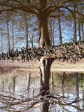 Riverbend Tree Reflections stock photography