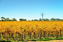 Riverland winnica w jesień kolorach obrazy stock