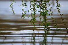 RiverRiver surface reflections with branches soaked in water stock photography