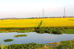 Rivers and rice paddies nine Stock Photography