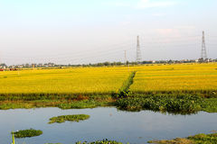 Rivers and rice paddies nine Royalty Free Stock Photo