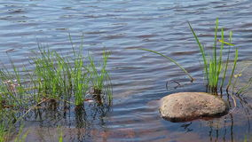 Rivers stream with stones and grass stock video footage