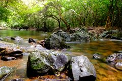 Rivers in streams that flow through the rocks. That are in the forest Stock Photography