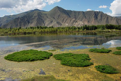 Rivers in  Tibet. Lhasa river  in  summer Stock Photo