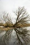 Riverscape con l'inondazione Fotografie Stock Libere da Diritti