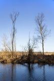 Riverscape con l'inondazione Fotografia Stock Libera da Diritti