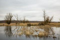 Riverscape con l'inondazione Fotografia Stock