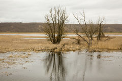 Riverscape con l'inondazione Fotografie Stock