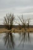 Riverscape con l'inondazione Immagini Stock