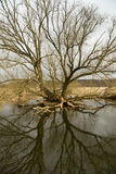 Riverscape con l'inondazione Immagine Stock
