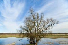 Riverscape con l'inondazione Immagine Stock Libera da Diritti