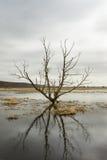 Riverscape z powodzią Obrazy Stock