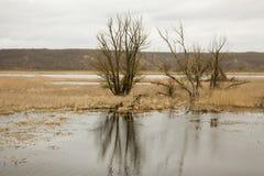 Riverscape z powodzią Zdjęcia Stock